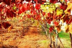 foto_001-fogliedautunno